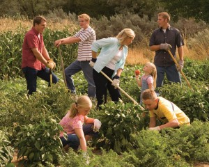 Mormon Gardening