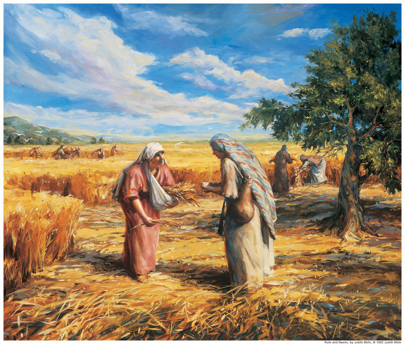 Ruth gleaning fiields