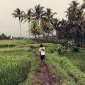 path wander