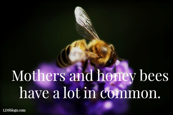 What Moms Learn From Bees About Real Life