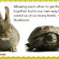 tortoise and hare meme