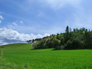 landscape-336142_640