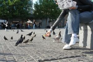 feeding-birds-92543_640