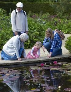 lilly-pond-805207_640