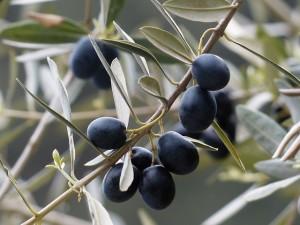 olives-357849_640