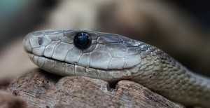 snake-653644_640