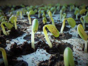 plants-1331667_640