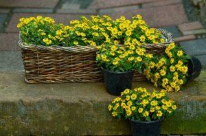flowers-1441841_640