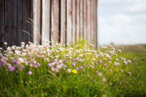 wildflowers-984338_640