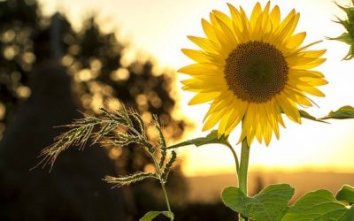 Vitamin D Deficiency, On the Rise