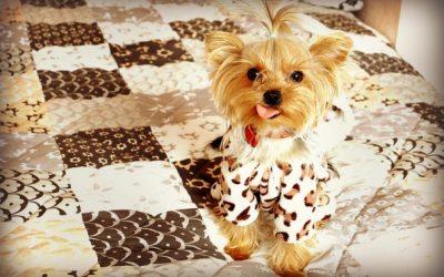 Puppy Dog Restoration