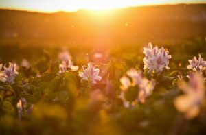 flowers sunlight sunset