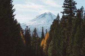 mountain nature trees