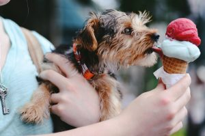 puppy dog ice cream
