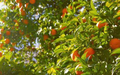 Low-Hanging Fruit, Part I
