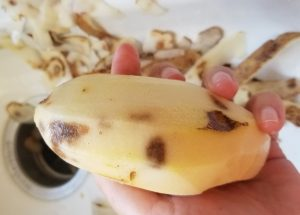 hidden bruises revealed by peeling a potato nobody rides for free